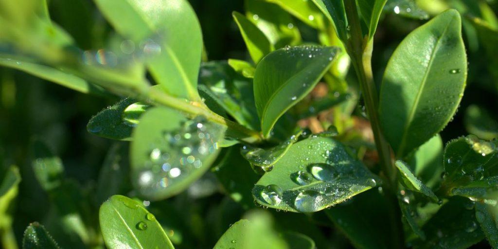 Pflanzen und Wasserstoffperoxid